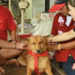 Heroic Dog In Thailand Rescues Baby Girl